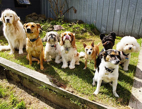 Blackburn Doggie Daycare