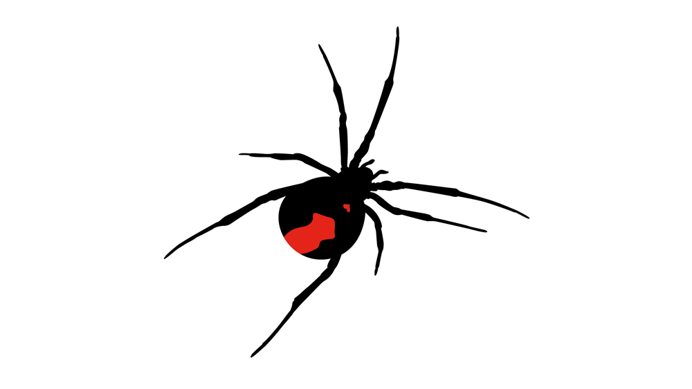 Red Back Love