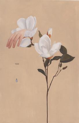 La zarpa de la magnolia