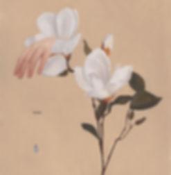 La zarpa de la magnolia_edited.jpg