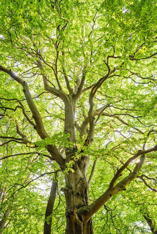Tree_Image.jpg