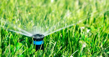 How Overwatering Affects Your Garden & Lawn