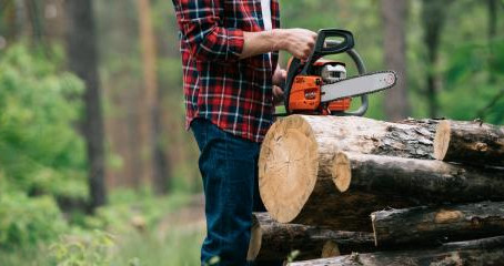 4 Reasons to Remove Old Trees on Your Property
