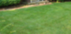 evergreen-2802_lawn.jpg