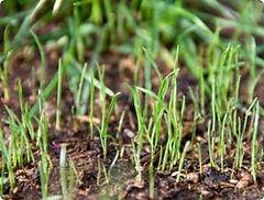 new_grass_T.jpg