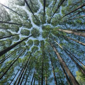 #017 - Que Lições Podemos Ter Com a Natureza?