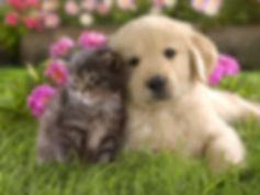 犬猫写真2.jpg