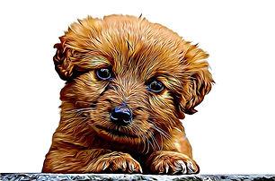 Puppy Slider Cartoon effect White bg (1)
