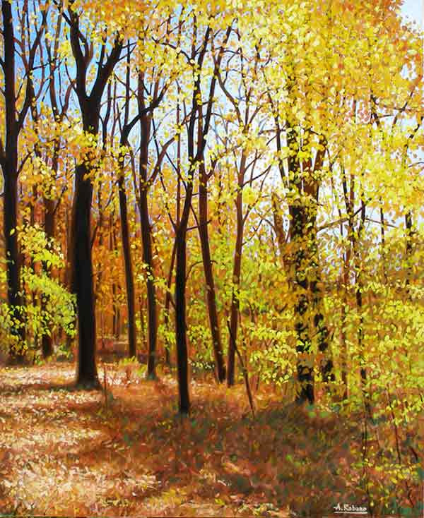 Fall at Southrn Ontario Forest