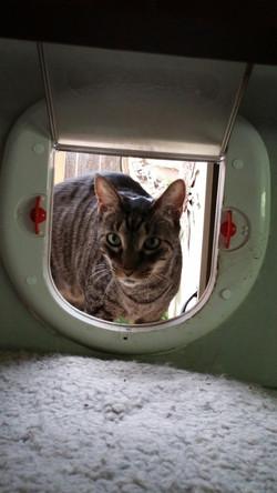 3Waldo in cat door