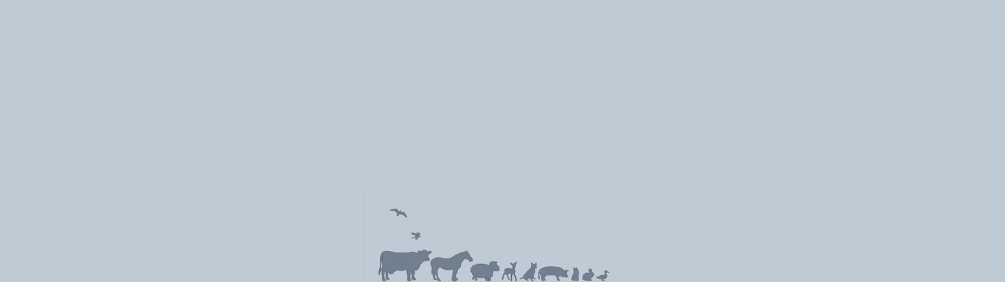 Animals_Tiny_Grey.jpg