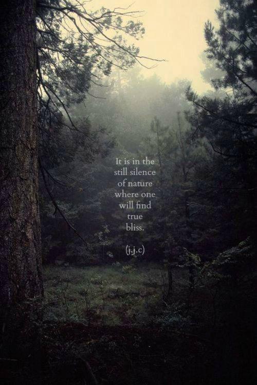 bliss in the woods.jpg