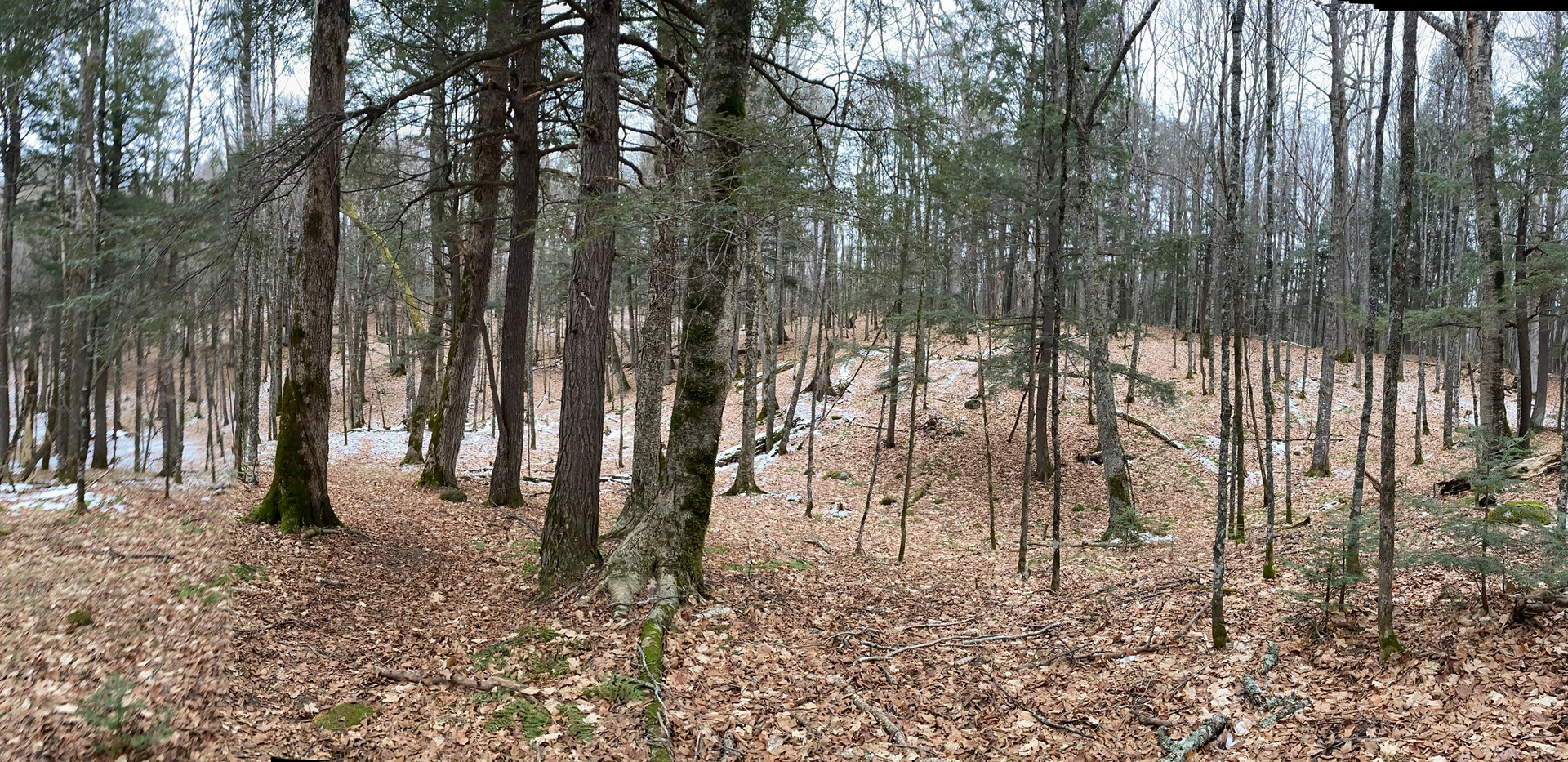 drummond woods3.jpg