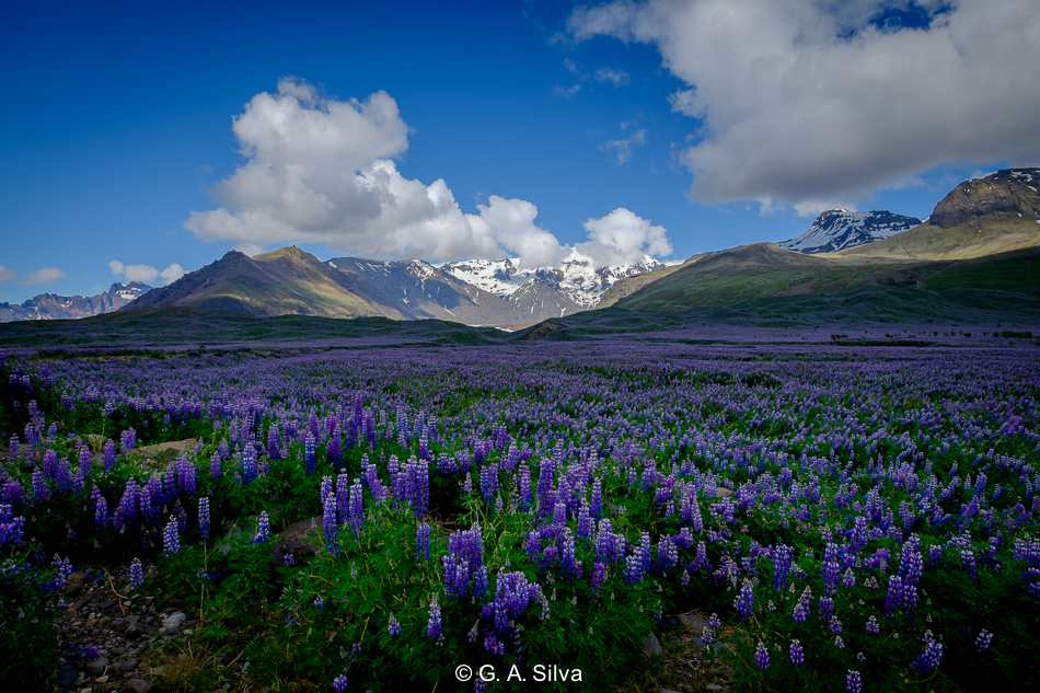 Iceland_Selection-27