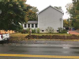 Hedge Renovation: After