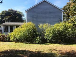 Hedge Renovation: Before