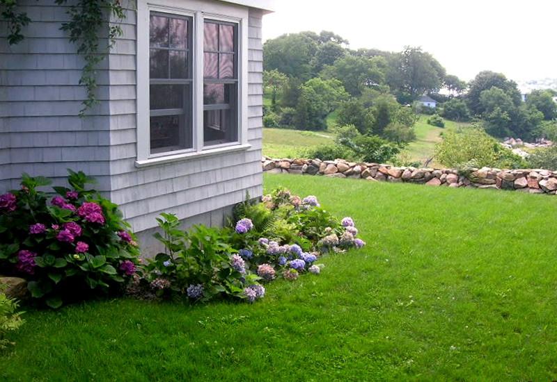lawn_-DSCN4307.jpg