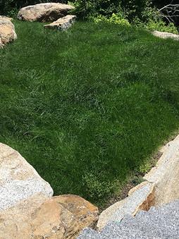 lawn_IMG_0343.jpg
