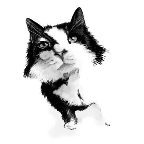 Crazy Cat.png