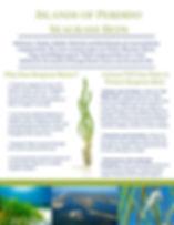 Seagrass Handout