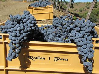 Weinkiste präsentiert Rotllan Torra