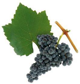 Die Weinkiste kostet – Blaufränkisch!