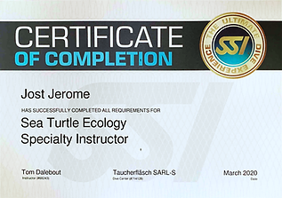 ssi sea turtle instr.png