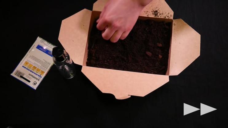 Tag 1: Anbau eigener Schnittlauch