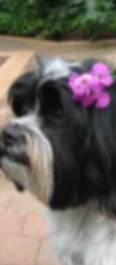 Copy-of-Flower-Girl-Tupp-283x300.jpg