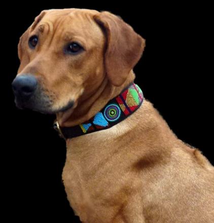 PC dog collar.png
