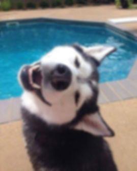 PC DOG SMILE POOL.jpg