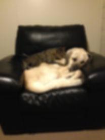 Falkor & Merlin chair.jpg
