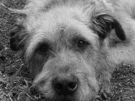 Hogarth The Wolfhound