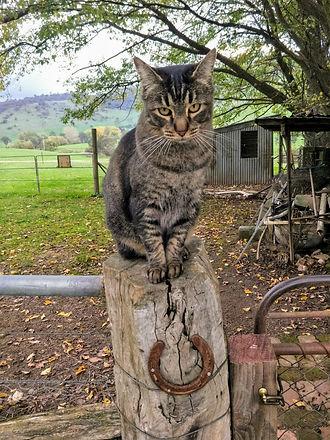 PC cat on stump.jpg
