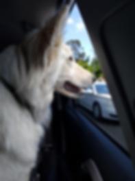 PC Dog Car.png