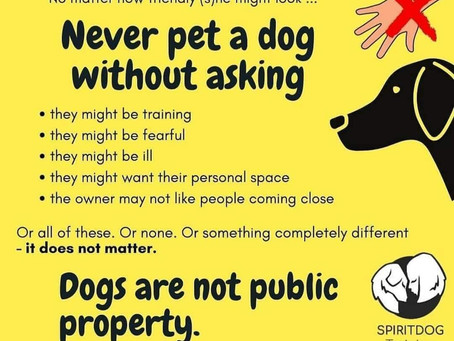 NEVER Pat A Dog Without Asking The Owner First!