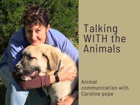 Talking WITH the animals