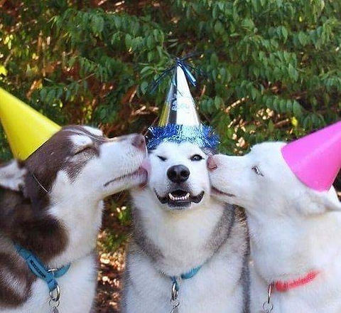 PC PARTY HATS DOGS.jpg