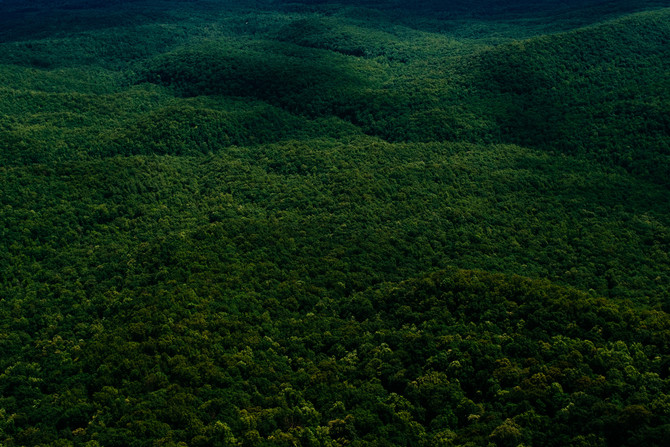 Why forests matter: the business case for sustainable land use