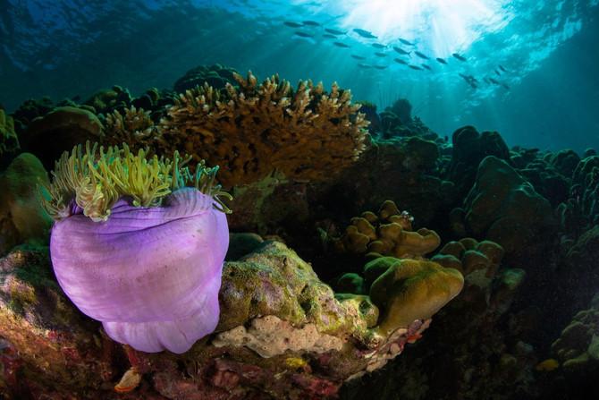 Business action on ocean acidification