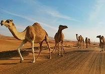 Photo gallery of Oman & UAE outdoor adventures