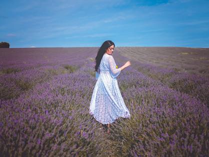 Campos de lavanda / Lavender fields