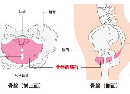 その腰痛の原因は骨盤底筋?