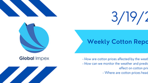 Weekly commodities report: Global Impex USA's cotton price analysis and expectations for 3/19