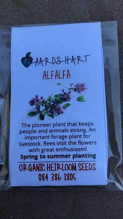 Alfalfa Heirloom