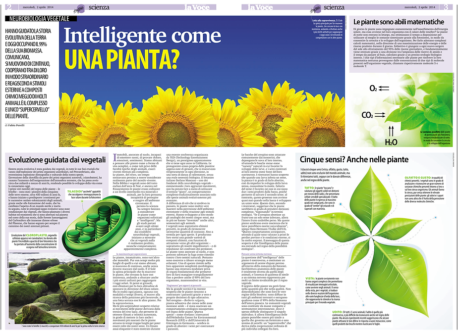 Are plants intelligent? (concept and graphic design)