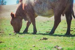 row work calves-19.JPG
