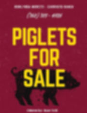 Piglets For Sale.jpg