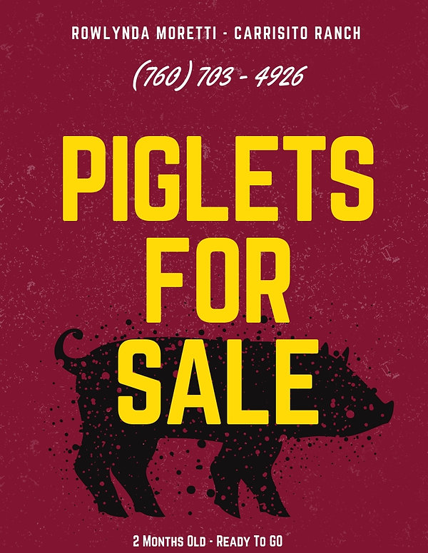 Piglets For Sale.jpg
