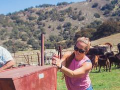 row work calves-28.JPG